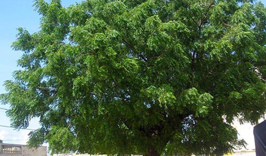 Altre foto dalla regione del Fatick in Senegal-2
