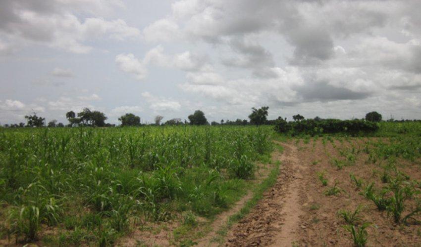 Altre foto dalla regione del Fatick in Senegal-13
